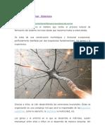 Neurodesarrollo Normal