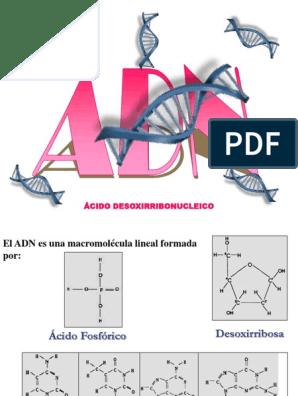 02 Genetica Adn Y Arn Ribosoma Arn