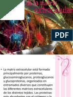 proteinasdelamatrizextracelular-120409203609-phpapp02
