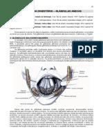 07. Glândulas Anexas (1)