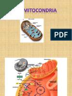 La Mitocondria y La Glucolisis 1