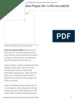 Cara Membuat Olahan Pangan Dari Azolla Microphylla - Berberita.com