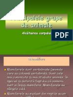 0 Prezentare Grupele de Animale