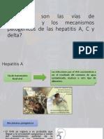 Hepatitis  7 8 y 9