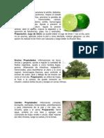 Plantas Grupo 1
