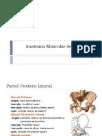 Anatomia Muscular de La Pelvis Femenina