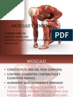 Presentación Músculo y Tendón 1