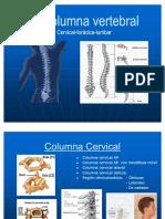 53878679-La-Columna-Vertebral-posiciones-radiologicas-y-anatomia.pdf