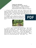Hama Dan Penyakit Tanaman Kakao-edi Dlingo
