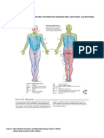 112493874-Dermatome-Myotome-Sclerotome.docx