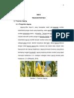 tinjauan pustaka kulit jagung.pdf