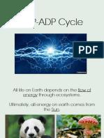 Atp-Adp Cycle PDF