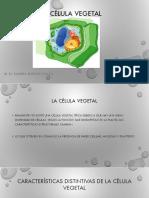 4-La Célula Vegetal