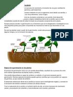 Proceso de Germinación de Una Planta