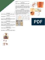 Órganos y Sistemas Del Hombre