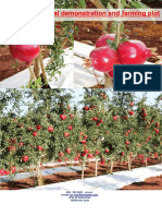 Granada Reporte Ensayo Netafim 2011 Ziv Charit 2012-06-13 Pomegranate Experimental Plot 2011