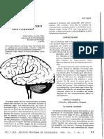 Historia del estudio del cerebro_Valdez 1993