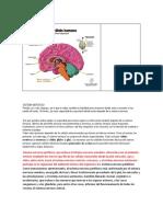 Algunos Neurotransmisores