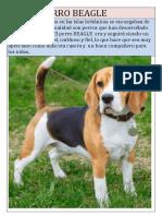 Raza Perro Beagle
