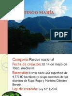 TINGO MARÍA.pptx