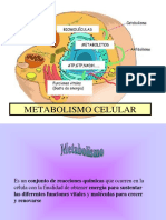 METABOLISMO-ENZIMAS