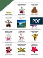 Orquídeas colombianas