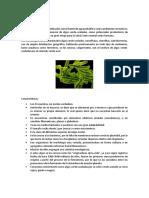 Las Cianofitas