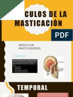 Diapositiva musculos masticadores