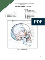 Anatomija skeleta glave.pdf