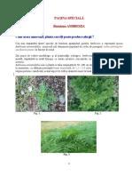 ambrozia_prezentare_si_combatere.pdf