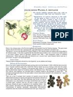 Maca Lepidium Meyenii materia medica herbs