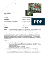 Mitchella Partridge Berry materia medica herbs