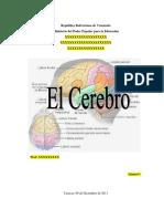 El Cerebro Humano2