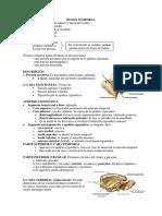 Hueso Temporal y Occipital