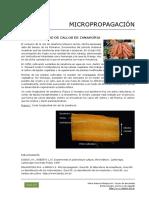 102_Micropropagacion_zanahoria.pdf