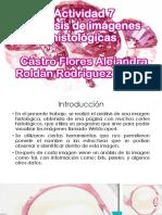 Actividad 7.pptx