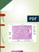 Presentacion de Tejido Digestivo III