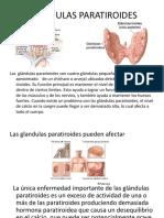 Exposicion Anatomia Del Sistema Nervioso