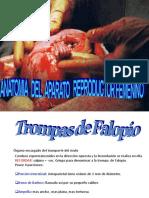 anatomia  femenina.ppt