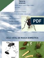 4moscas-mosquitos.pdf