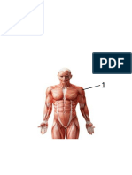muscles moving exam name origin insertion action.docx