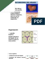 2 Cirrosis Hepatica