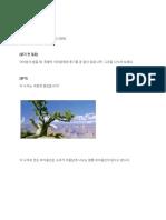 L-6 _무릎꿇은 나무