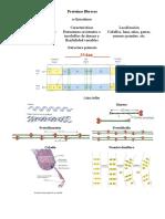 protfibrosas.pdf