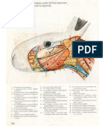 Anatomia Conejo