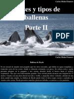 Carlos Michel Fumero - Clases y Tipos de Ballenas, Parte II