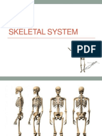 SKELETAL SYSTEM.pptx