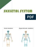 Axial Skeletal