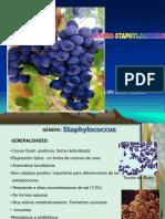 Staphylo y Strepto