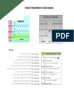 estructura AG y TG.pdf